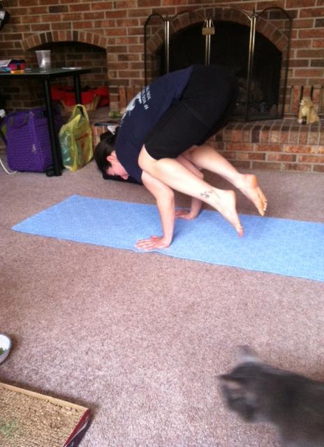 yogacrow